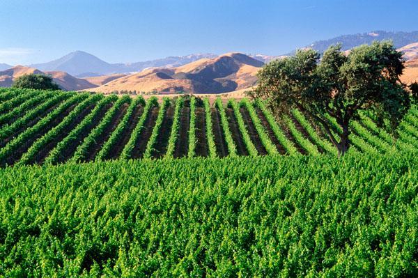 Cheers to 2017 Vintners Celebration of Harvest Weekend